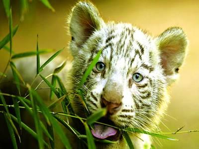 بیونس آئرس: چیتے کا بچہ فوٹو گرافر کی طرف دیکھ رہا ہے