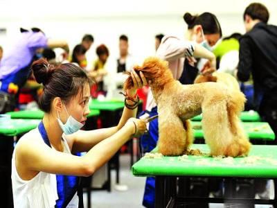 بیجنگ: بیوٹیشن ٹیلنٹ شو میں ایک ماہر کتے کے بال کاٹ رہی ہے