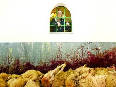 کسوو: روائتی تقریب کیلئے ذبح کی گئی بھیڑوں کو خاتون کھڑکی سے دیکھ رہی ہے
