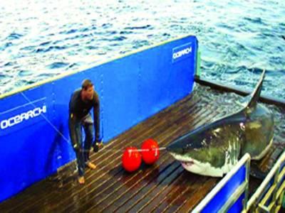 نیویارک: سمندرسے پکڑی گئی ایک دیوقامت شارک مچھلی بحری جہاز کے عرشے پر رکھی جارہی ہے