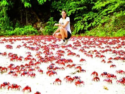 پیرس: ایک خاتون سرخ رنگ کے چیونٹوں کو جاتے ہوئے دیکھ رہی ہے