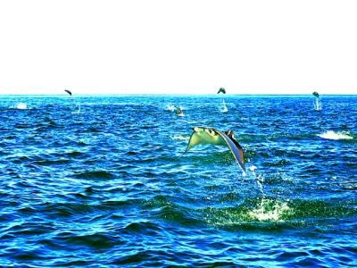موبولاریز مچھلی کی ایک قسم جو چند سیکنڈ کے لیے اڑ بھی سکتی ہے