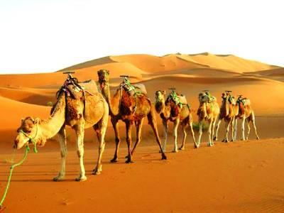 اونٹ صحرا کی گرمی میں لمبے عرصے تک بغیر پانی کے کیسے رہ لیتے ہیں؟