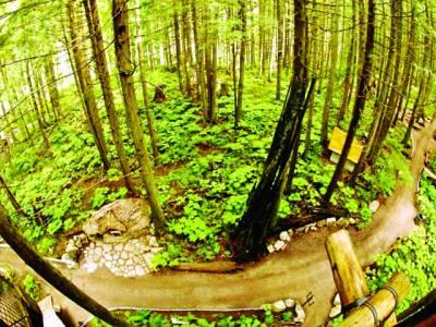 نیویارک: ہاتھوں سے بنائے گئے ایک چھوٹے خوبصورت جنگل کا ایک منظر