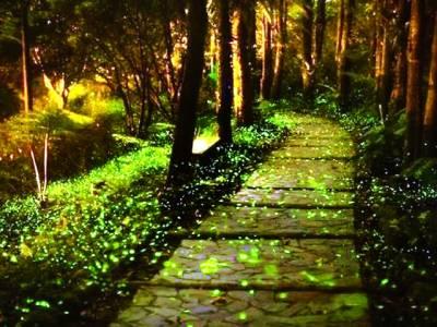 چین میں جگنوؤں کے پہلے پارک کا افتتاح کردیا گیا
