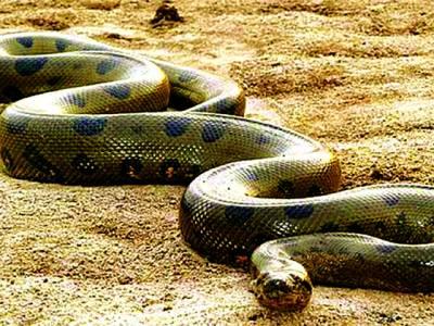 دنیا کا سب سے بڑا سانپ دریافت ہو گیا، خوفناک تصاویر جاری