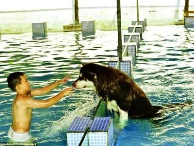 چین میں جانوروں کو بھی لگژری سہولیات ملنے لگیں،کتوں کے نہانے کیلئے سوئمنگ پول