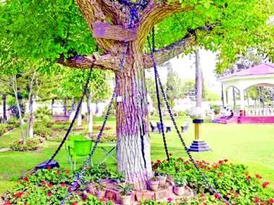 یہ درخت گزشتہ 118سال سے پاکستان میں گرفتار ہے