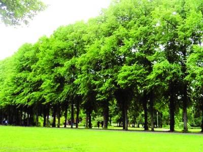 درخت آپس میں باتیں کرتے اوراپنے جذبات کا اظہار بھی کرتے ہیں، ماہرین ماحولیات