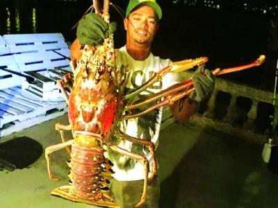 برمودا کے ساحل پر 14 پونڈ وزنی لابسٹر پکڑا گیا