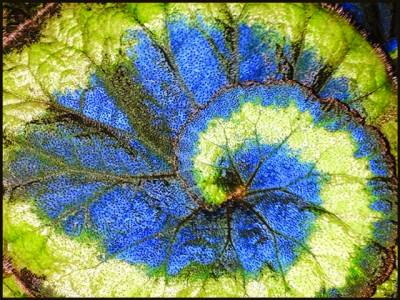 لندن،سائے میں اْگنے اور نیلے پتوں والا پودا دریافت