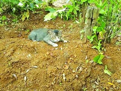 محبت کی عظیم داستان، ایک سال سے قبرپر بیٹھی بلی مالک کا انتظار کررہی ہے