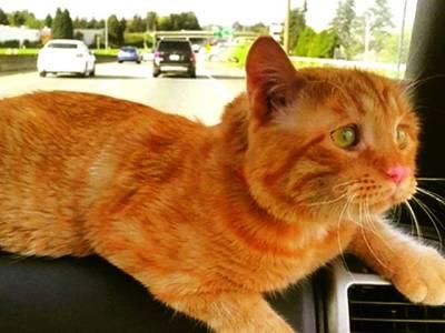 دنیا کی اداس ترین بلی کی تصاویر نے انٹرنیٹ پر دھوم مچا دی