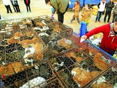 چین میں بلیوں کا گوشت فروخت کیا جانے لگا
