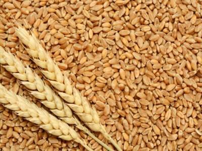 گندم کی سرکاری سطح پر خریدو فروخت