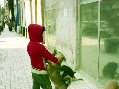 کتوں کے ساتھ رقاص بچے کی کہانی ، مصری معاشرہ ہِل کر رہ گیا