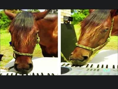 آسٹریلوی گھوڑے نے پیانو پر خوبصورت دْھنیں بکھیردیں