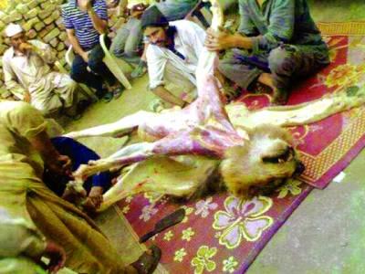 کیا پاکستان میں واقع ہی شیر کا گوشت بھی بکنے لگا ہے؟