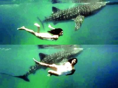 کترینہ کی شارکس کے ساتھ تیراکی کی وڈیو وائرل