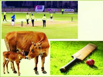 بھارت ،فتح سمیٹنے والی ٹیم کو ٹرافی کی جگہ گائے انعام میں دیدی