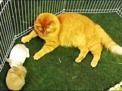 پانچ خرگوش بی مانو کے پکے دوست بن گئے
