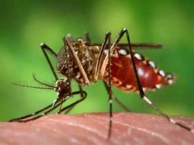 کچھ ملیریا کے بارے میں