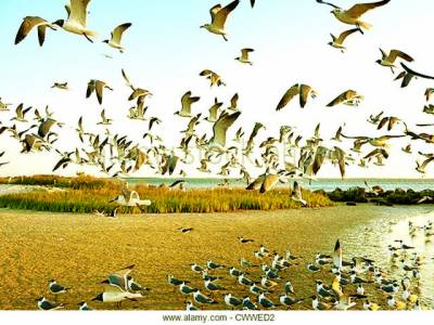 کینیا کی جھیل پر ہزاروں بگلوں کی آمد،خوبصورت مناظر سیاحوں کی توجہ کا مرکز