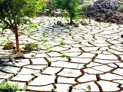 آب و ہوا میں تبدیلی اہم فصلوں کے لیے خطرناک