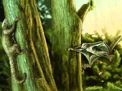 16 کروڑ سال قدیم ''اْڑن ممالیہ'' کی دریافت