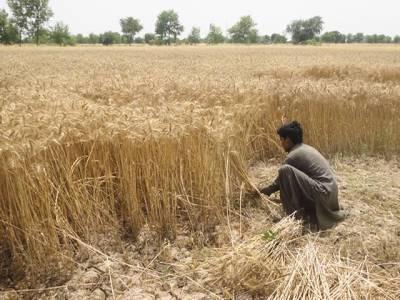 محکمہ زراعت اور جدید تقاضے