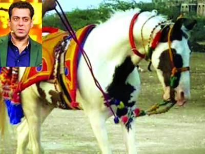 سلمان خان کی 2کروڑ کی پیشکش گھوڑے کے مالک نے ٹھکرادی