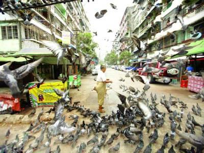 منیلا: خاتون کبوتروں کا دانہ ڈال رہی ہے