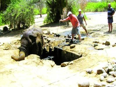 نیمبیا: لوگ گٹر میں پھنسے ہوئے ہاتھی کو رسیوں کی مدد سے باہر نکال رہے ہیں